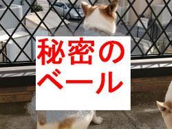 Nana_329_2