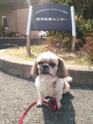 Gan_ken3